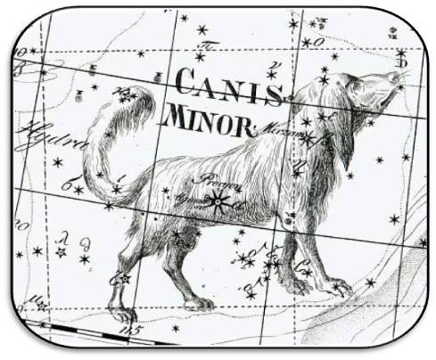 canis_minor