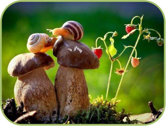 caracoles en hongos