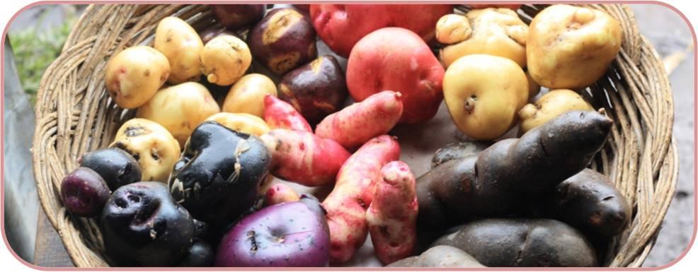 verduras_ajiaco