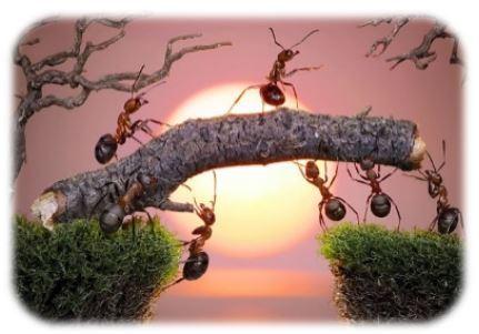 hormigas trabajando al atardecer